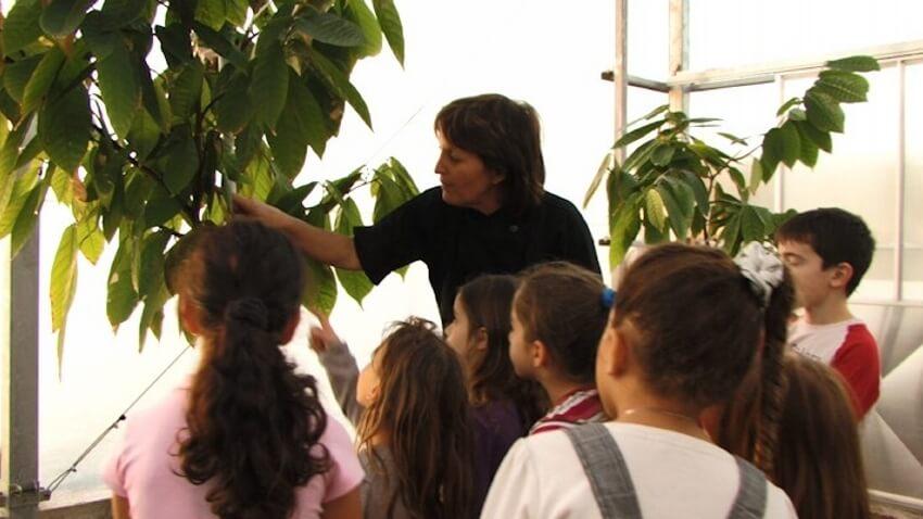 חממת עצי קקאו